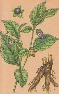 Биохимия лекарственных растений
